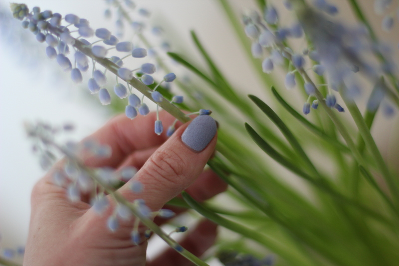 polish: flowers – grape hyacinth
