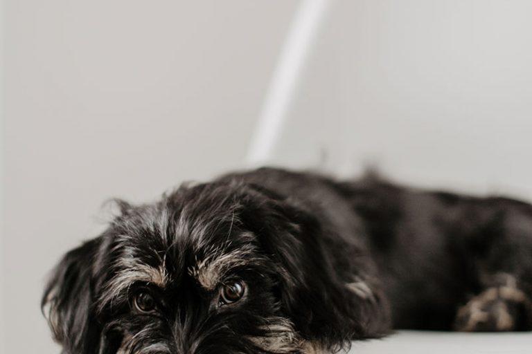 Wir haben einen Hund gerettet – willkommen Frido